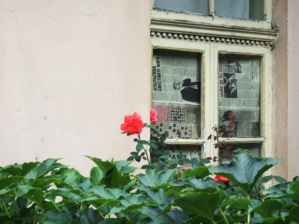 The rose and the newspaper