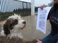 La protesta ciudadana obliga a la Mancomunidad a crear una perrera pública para reivindicar el cuidado de los animales abandonados