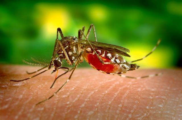 Colabora con la NASA para rastrear y predecir brotes de enfermedades transmitidas por mosquitos