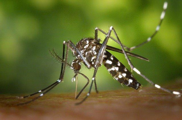 Mosquito Alert: una app para detectar la presencia de mosquitos invasores