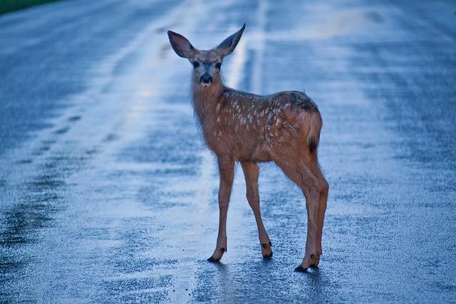 Plan Stop Atropellos de Fauna Española (SAFE): ciencia ciudadana para proteger especies autóctonas